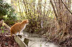 Wilbur ontdekt de geneugten van zijn nieuwe omgeving ...