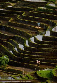 Some of the most beautiful rice terraces can be found in Belimbing. At this stage the terraces are being prepared to plant the new rice.