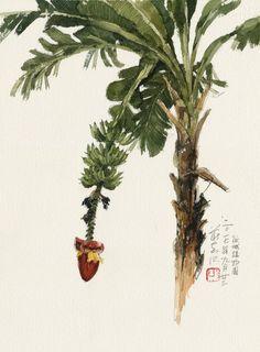 KiahKiean Watercolor And Ink, Watercolor Flowers, Watercolor Paintings, Tree Sketches, Art Drawings Sketches, Tree Illustration, Botanical Illustration, Botanical Drawings, Botanical Art