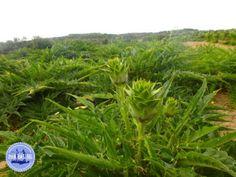 - Zorbas Island apartments in Kokkini Hani, Crete Greece 2020 Crete Island, Crete Greece, Herbs, Sun, Holiday, Plants, Vacations, Herb, Holidays