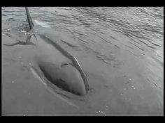 I think the message is noise pollution... Orca tries to communicate with humans by imitating their boat's motor!
