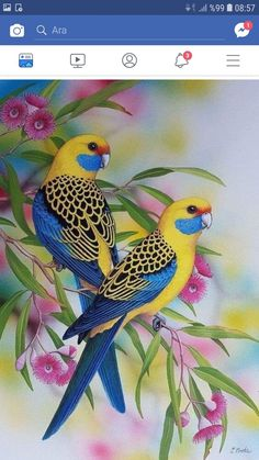 """""""Yellow Rosellas"""" by Lyn Cooke. Paintings for Sale. Bluethumb – Online Art Galle… """"Yellow Rosellas"""" by Lyn Cooke. Paintings for Sale. Beautiful Flowers Wallpapers, Beautiful Nature Wallpaper, Cute Birds, Pretty Birds, Funny Birds, Most Beautiful Birds, Animals Beautiful, Exotic Birds, Colorful Birds"""
