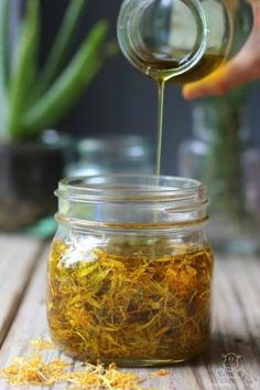 Calendula Oil Recipe - Calendula's soothing properties make it a favorite for supporting wound healing, nourishing skin and promoting gut health. It's easy to grow or buy at an affordable price for use in teas, infused oils, salves, compresses and more.  Here's a super easy method for making it into an infused oil, along with five ways to use it!
