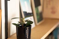 【EcoDecoスタッフ岡野の自邸リノベーション】本棚に近づくと、植物の葉上にカエルの置物が鎮座していた。岡野らしい遊び心。#本棚 #書庫 #雑貨 #本 #ディスプレイ #EcoDeco #エコデコ #インテリア #リノベーション #renovation #東京 #福岡 #福岡リノベーション #福岡設計事務所 Plants, Plant, Planets