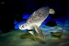 Sea Turtle Mystic Aquarium