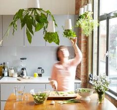 Indoor upside-down hanging plant holders.  I'm sure I could come up with a DIY for this.