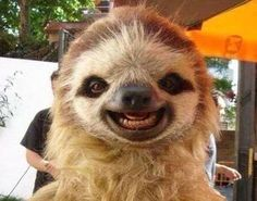 Happiest sloth I've ever seen! - Imgur