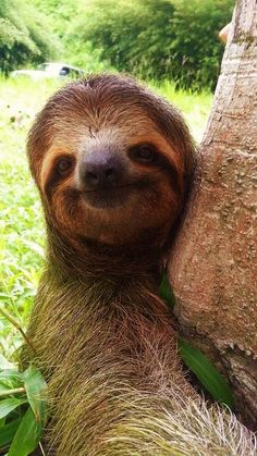 Saving a sloth's life in Costa Rica