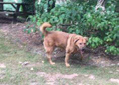 Found Dog - Mix - Duluth, GA, United States 30097 on May 09, 2016 (13:00 PM)
