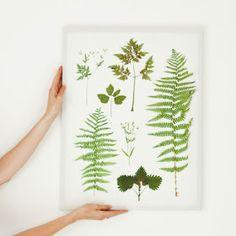 Jak wykorzystać suszone kwiaty i liście? Zrób obraz - zielnik!