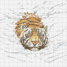 Gallery.ru / Фото #1 - tigers - Zenobia23