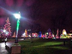 The Christmas tree Forest , London , Ontario