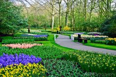 Beautiful Netherland Flower Garden