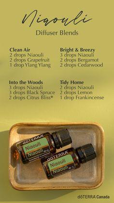 Essential Oils Uses Chart, Essential Oil Diffuser Blends, Doterra Diffuser, Niaouli Essential Oil, Oregano Essential Oil, Diffuser Recipes, Doterra Essential Oils, Nyx Matte, Matte Lipsticks