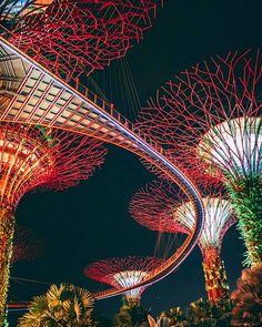 HD photo by Zhu Hongzhi ( on Unsplash New Wallpaper, Black Wallpaper, Flower Wallpaper, Nature Images, Nature Photos, Beach Photos, Hd Photos, Singapore Photos, Singapore Singapore
