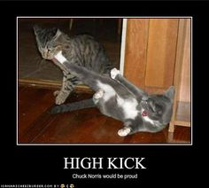 A collection of the funniest cat motivational posters and funny kitten inspirational posters. You'll laugh and be inspired at the same time. Funny Animals With Captions, Funny Cat Pictures, Animal Pictures, Animal Antics, Animal Memes, Animal Funnies, Crazy Cat Lady, Crazy Cats, Big Cats