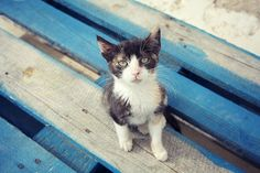 Greece days 8-10 Hydra Island 56 by juliepersons, via Flickr
