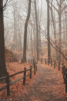 Bundling up for early morning walks in the cool, foggy autumn air is a perfect…