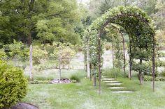 Arbor - espelier trees