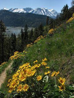 Sauer Mountain Trail