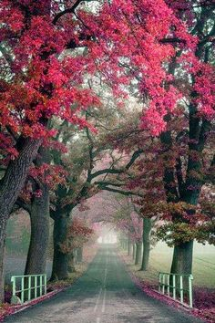 beautiful foggy road with red trees
