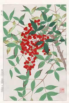Nandina from Shodo Kawarazaki Spring Flower Japanese Woodblock Prints Art And Illustration, Botanical Illustration, Illustrations, Japanese Art Styles, Japanese Prints, Historia Natural, Art Japonais, Japanese Flowers, Japanese Painting