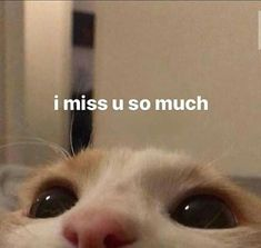 Likes, 45 Comments - 💞✨ 𝔀𝓱𝓸𝓵𝓮𝓼𝓸𝓶𝓮 𝓶𝓮𝓶𝓮𝓼 ✨💞 Cute Cat Memes, Cute Animal Memes, Cute Love Memes, Stupid Funny Memes, Funny Relatable Memes, In Love Meme, Funny Cats, Response Memes, Sad Cat