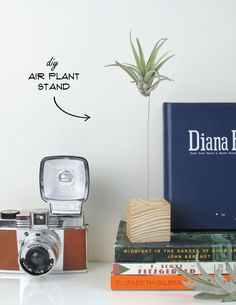 If you were graced a black thumb (like me!) and have trouble keeping even the simplest of plants alive in your home, you might want to consider investing i