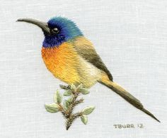 Trish Burr  orange-breasted-sunbird  http://trishburr.com/2012/10/11/sunbird/