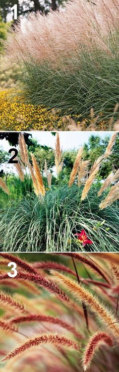 3 Ornamental Grasses For Backyard Garden