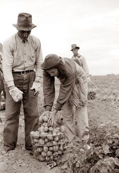 Harvesting Potatoes in 1939 Rio Grande County, Colorado. The twine on the girl's belt was for sewing the potato sacks closed after they were filled.