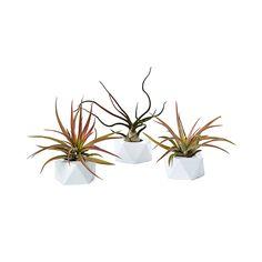 Pure Prism Planters - Set of 3