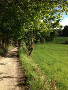 (Photo from Leda McIntyre-Hall/ ) - A view of the Camino de Santiago near Sarria, Spain.