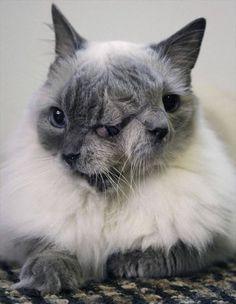極めて珍しい、顔が二つの結合双生動物(奇形動物)     ailovei