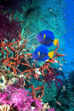 Coral reef scenery with yellow tail tangs    | underwater | underwater art | interior design | modern art | modern | beautiful | #metalwallart #interiordesign https://www.statements2000.com/