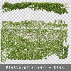 8_Kletterpflanzen-Efeu-Ranken-Freigestellt.jpg 800×800 pixels