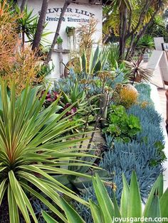 Do you love succulents? Enjoy this tour of Old Town San Diego, and the amazing variety of succulents throughout the town. Succulent Display, Succulent Care, Succulent Arrangements, Old Town San Diego, Front Yard Landscaping, Landscaping Ideas, Drought Tolerant Landscape, Succulents Garden, Native Plants