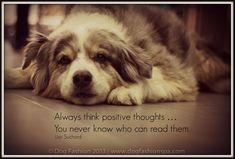 ❤️Hit That Share Button To Motivate Your Friends & Family❤️ ▬▬▬▬▬▬▬▬▬▬▬▬▬▬▬▬▬▬▬ #MondayMotivation #MotivationMonday #quotes #quoteoftheday #motivationalquotes #PuppyLove #PawPrints #Happiness #LancasterPuppies www.LancasterPuppies.com