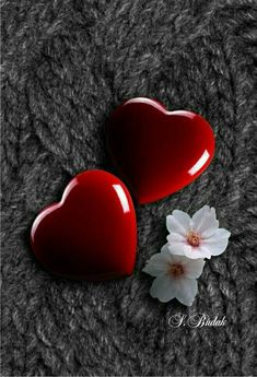 Corazones Animados Fotos De Amor Con Movimiento Corazon