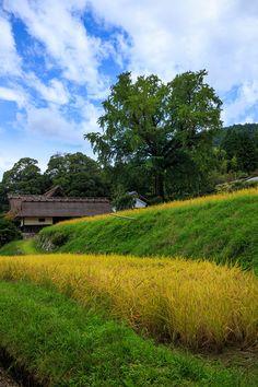 越畑・実りの季 : 花景色-K.W.C. PhotoBlog
