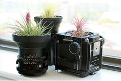 Old Camera equipment as Planters