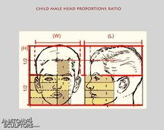 child male head proportions ratio