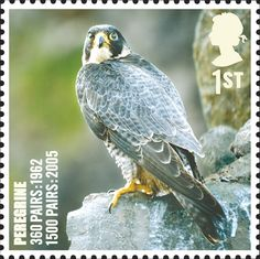 Royal Mail Special Stamps | Birds. UK species in recovery