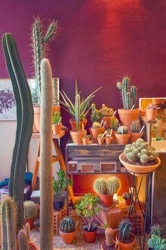 Les Succulents Cactus shop in Paris. Succulents are one of my favorite types of plants! Les Succulents Cactus, Planting Succulents, Planting Flowers, Indoor Garden, Garden Plants, Indoor Plants, House Plants, Leafy Plants, Cactus Planta