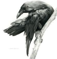 lovely raven bird illustration