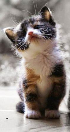 AnimalsFree- Adorable Kitten