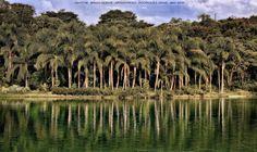 https://flic.kr/p/HajUK3   INHOTIM . May 2016  23   Inhotim, Museo y parque ecologico natural. Brumadinho, Minas Gerais. Fotografia: Artexpreso . Rodriguez Udias . *Photochrome Artwork Edition / BH, Brasil . May 2016 .. Website: rodudias.wix.com/artexpreso #Inhotim #artexpreso #photochrome #minasgerais #soubh