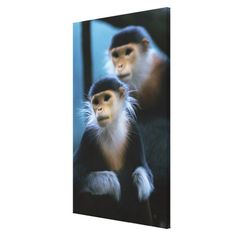 ==>>Big Save on          Close-up of Douc Langurs Canvas Print           Close-up of Douc Langurs Canvas Print we are given they also recommend where is the best to buyThis Deals          Close-up of Douc Langurs Canvas Print lowest price Fast Shipping and save your money Now!!...Cleck Hot Deals >>> http://www.zazzle.com/close_up_of_douc_langurs_canvas_print-192055161360511002?rf=238627982471231924&zbar=1&tc=terrest