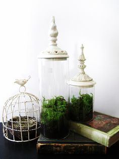 bird cages and terrariums