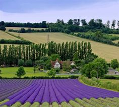 Picture of Kent Countries Around The World, Around The Worlds, Places Ive Been, Places To Go, Lavender Fields, Life Is An Adventure, England Uk, Trip Planning, Wales